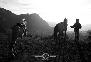 Photo of the Week – Horses at Mount Bromo