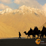 Travel Photo of the Week – The Bactrian Camel of Nubra Valley